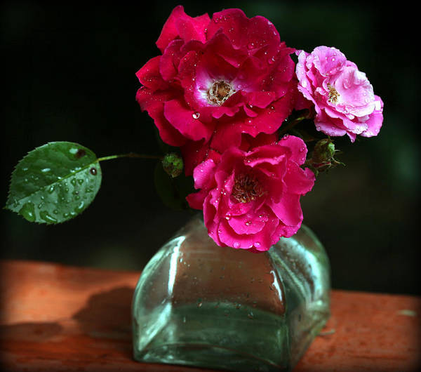Photograph - Pretty Red And Pink Flowers by Sheila Kay McIntyre