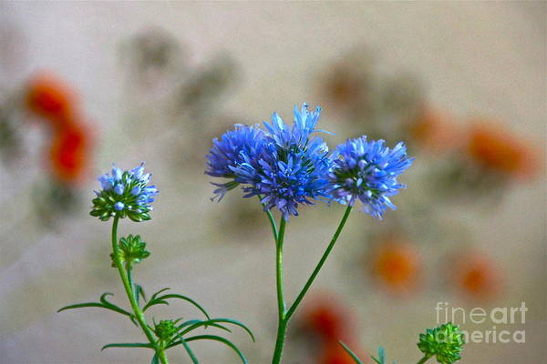 Photograph - Pretty Weeds by Byron Varvarigos
