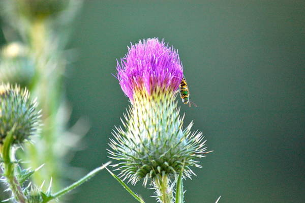 Photograph - Prickly Situation by Mary McAvoy
