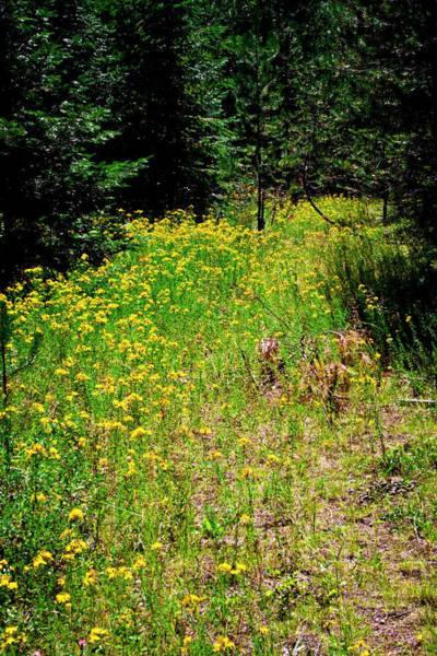 Priest Lake Photograph - Priest Lake Trail Series Iv - Small Meadow by David Patterson