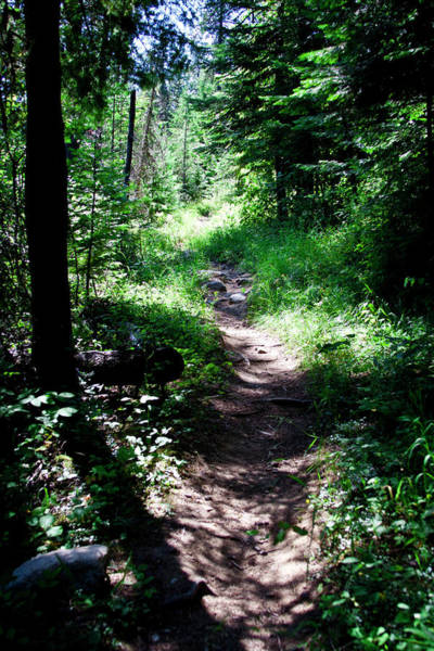 Priest Lake Photograph - Priest Lake Trail Series V - Shade On The Trail by David Patterson