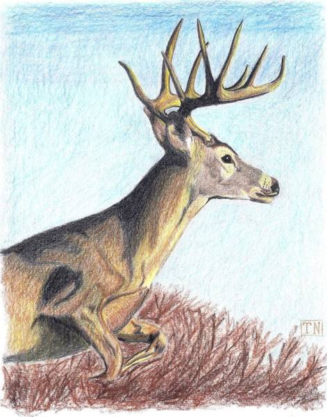White Tailed Deer Drawing - Prince Of The Flatwoods by Tony  Nelson