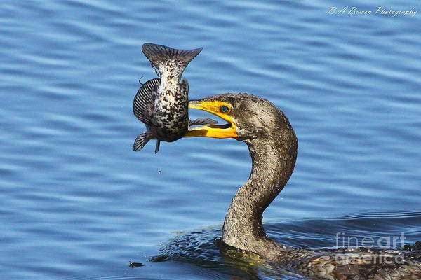 Photograph - Prized Catch by Barbara Bowen
