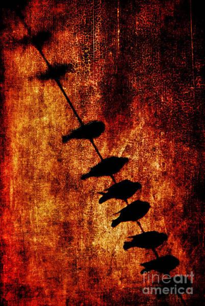 Burnt Orange Photograph - Prophets by Andrew Paranavitana