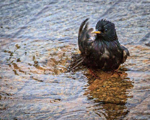 Photograph - Public Bathing by Bob Orsillo