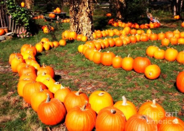 Photograph - Pumpkin Patch Path by Carol Groenen