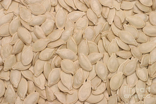 Cucurbitaceae Photograph - Pumpkin Seeds by Ted Kinsman
