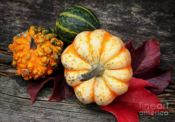Photograph - Pumpkin Still Life by Jutta Maria Pusl