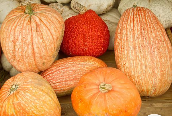 Cucurbitaceae Photograph - Pumpkins And A Red Pumpkin by Douglas Barnett