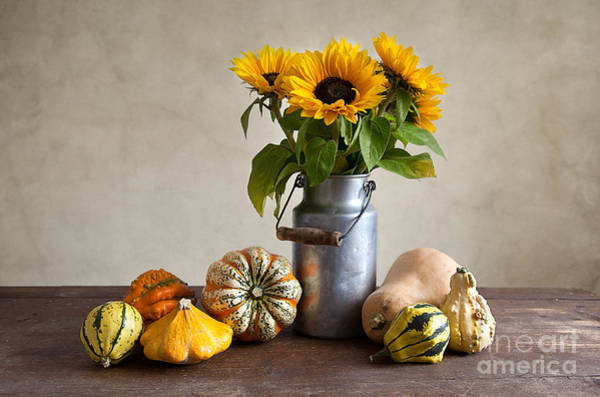 Sunflowers Photograph - Pumpkins And Sunflowers by Nailia Schwarz