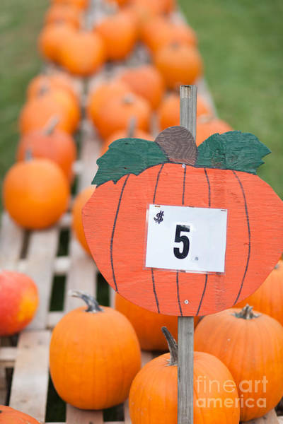 Photograph - Pumpkins For Sale II by Clarence Holmes