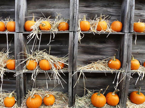 Photograph - Pumpkins For Sale by Jeff Lowe