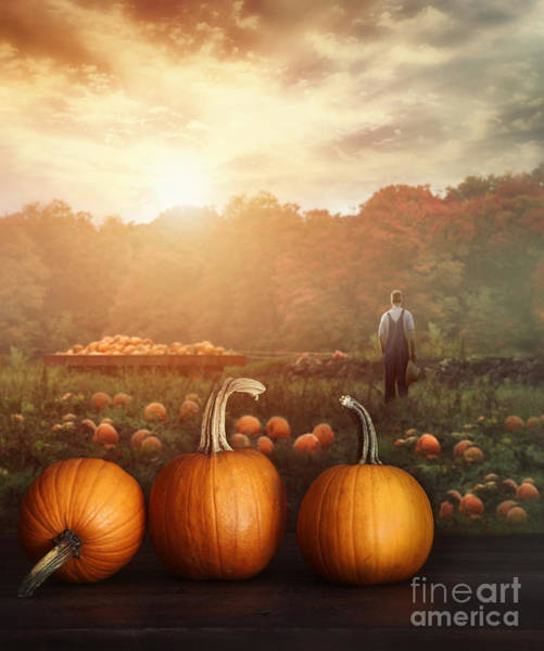 Photograph - Pumpkins On Table In Farmer's Field by Sandra Cunningham