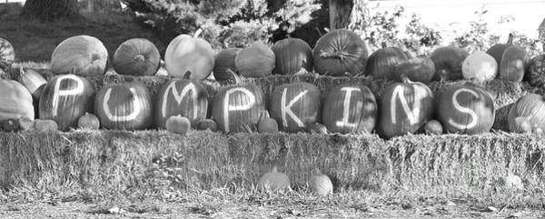 Photograph - Pumpkins P U M P K I N S Bw by James BO Insogna