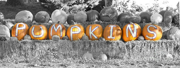 Photograph - Pumpkins P U M P K I N S Bwsc by James BO Insogna
