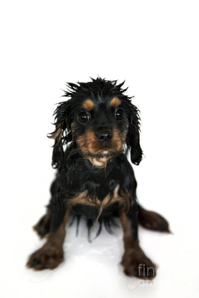 Puppy Bathtime Art Print