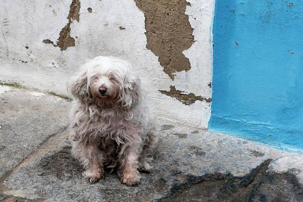Photograph - Puppy Espana  by Lorraine Devon Wilke