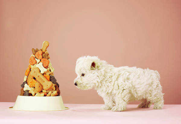 Dog Biscuit Photograph - Puppy Looking At Pile Of Biscuits In Dog Bowl by Martin Poole