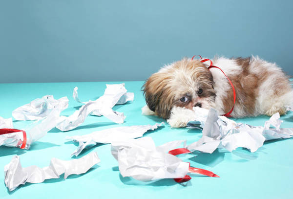 Messier Object Photograph - Puppy Sleeping In Ripped Warpping Paper by Martin Poole