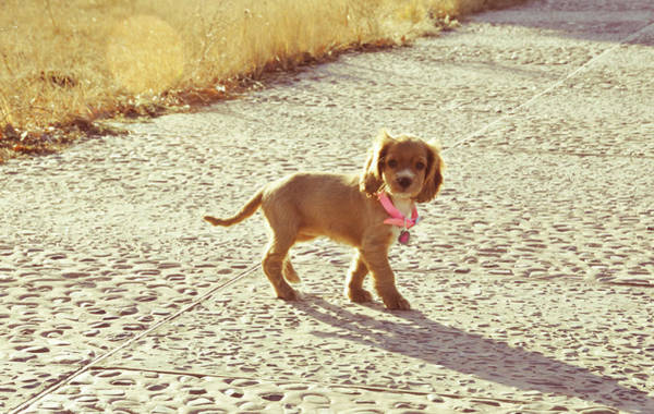 Puppy Photograph - Puppy Walking by Gml