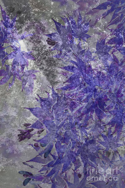Wall Art - Photograph - Purple And Grey by Affini Woodley