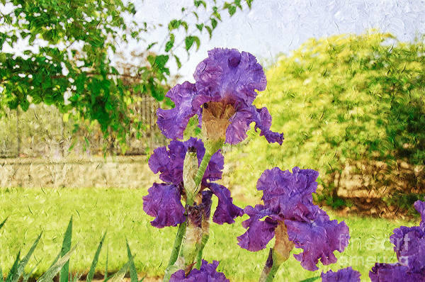 Photograph - Purple Iris Party Painterly by Andee Design
