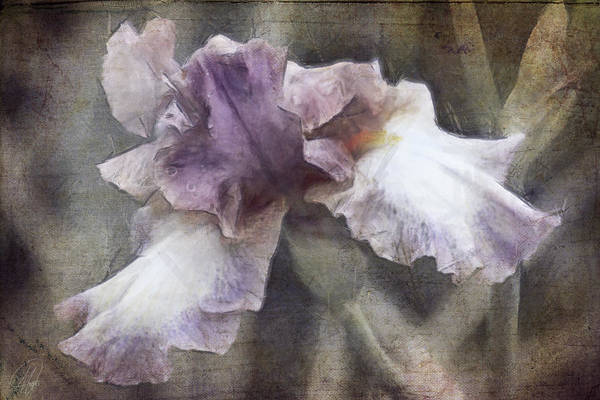 Wall Art - Digital Art - Purple by Margaret Hormann Bfa