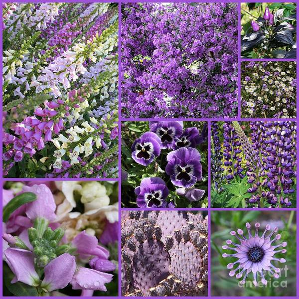 Photograph - Purple Nature Collage by Carol Groenen