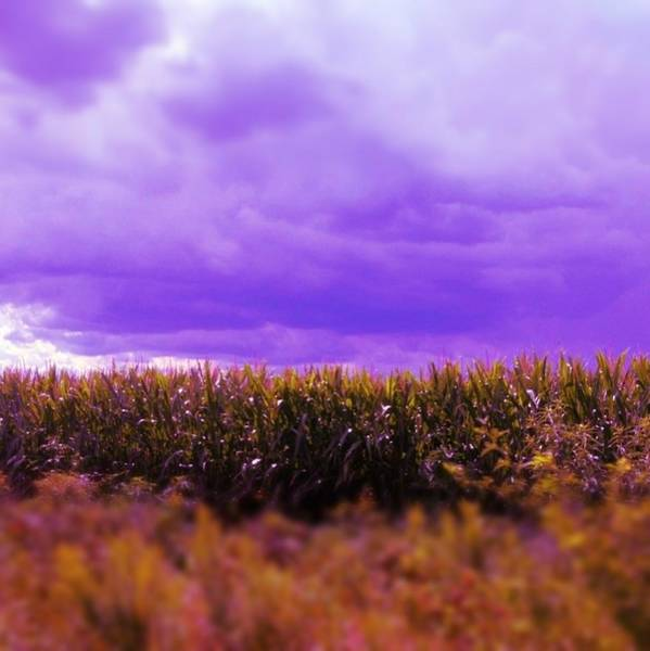 Photograph - Purple Sky by Lora Mercado