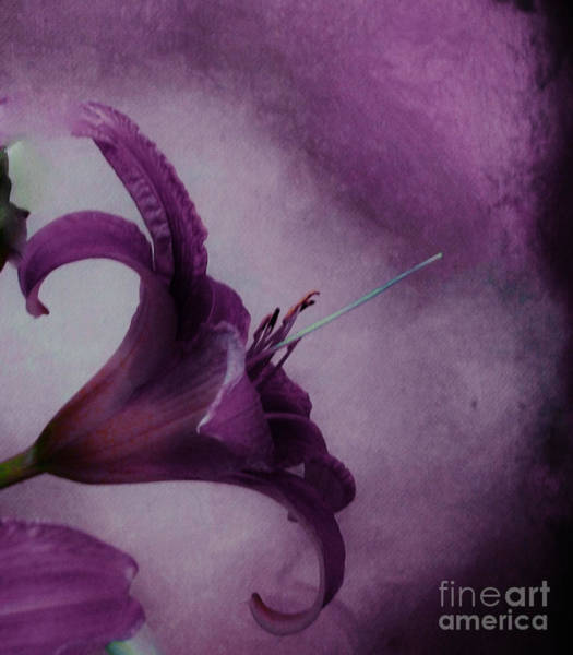 Tigerlily Wall Art - Photograph - Purple Tiger by Marsha Heiken