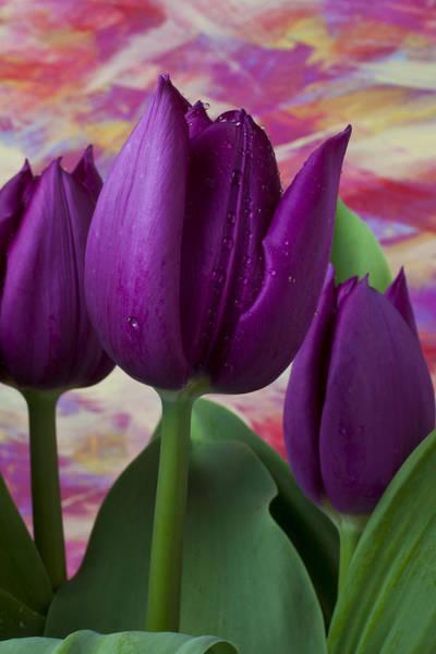 Purple Tulip Photograph - Purple Tulips by Garry Gay