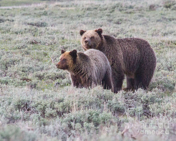 Photograph - Quad Mom And Cub by Katie LaSalle-Lowery