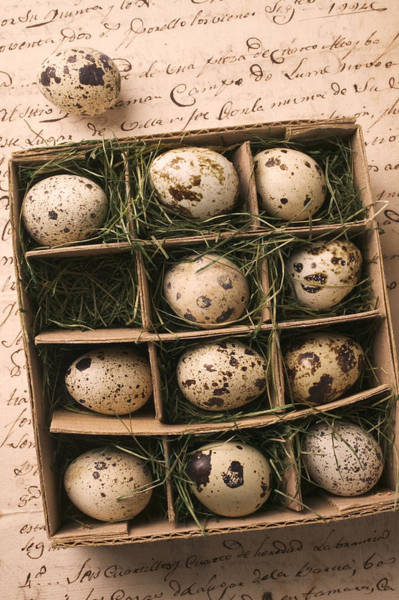 Compartments Photograph - Quail Eggs In Box by Garry Gay