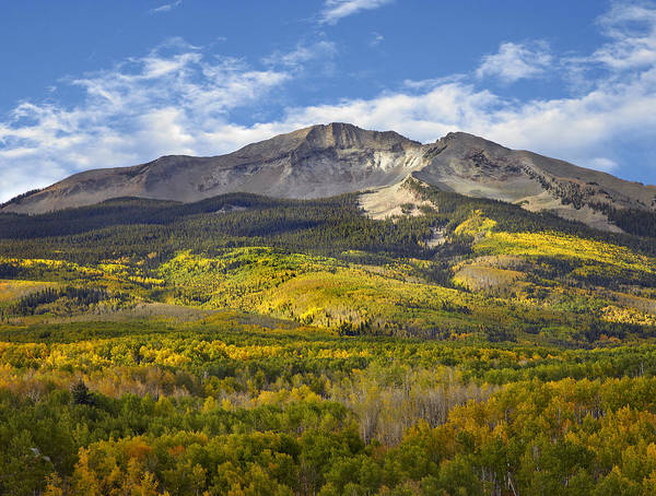 Timberline Photograph - Quaking Aspen Forest And East Beckwith by Tim Fitzharris