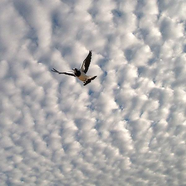 Bird Photograph - Quilted Sky by Cameron Bentley