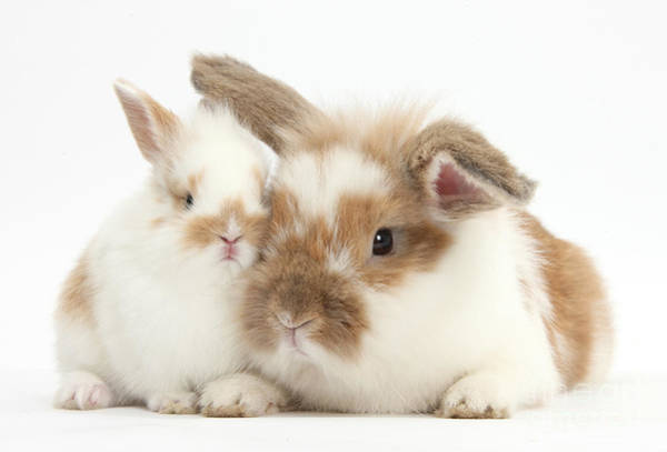 Photograph - Rabbit And Baby Bunny by Mark Taylor