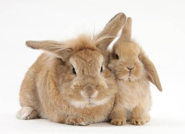 Photograph - Rabbit And Baby Rabbit by Mark Taylor