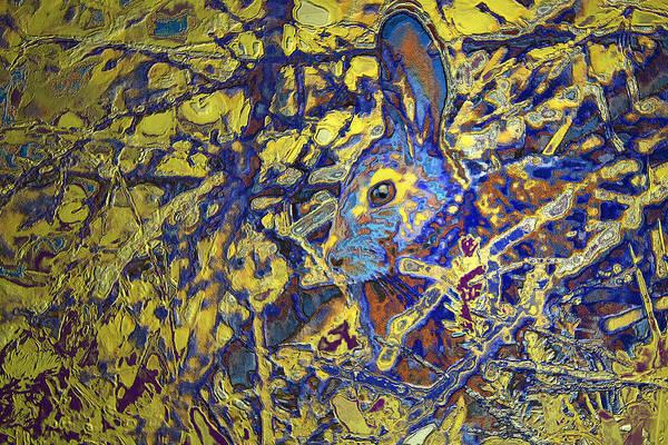 Photograph - Rabbit In Brush by Belinda Greb