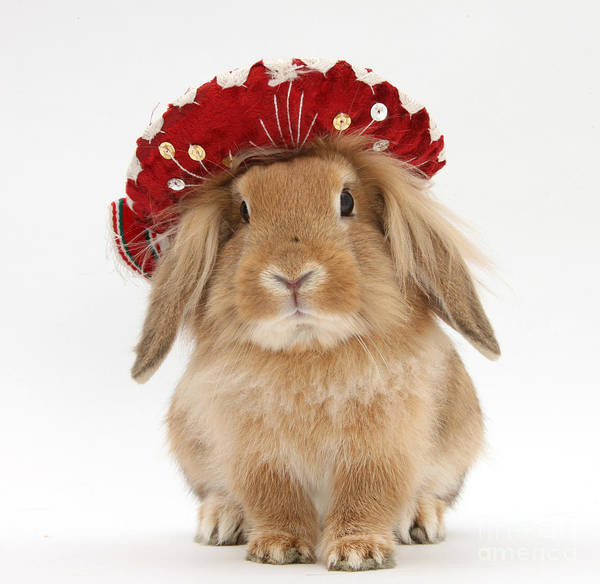 Photograph - Rabbit Wearing A Hat by Mark Taylor