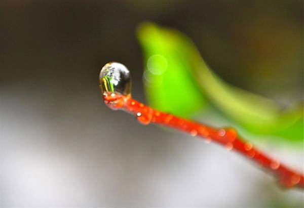 rain drops Tiny Wonder Art Print by Gloria Warren