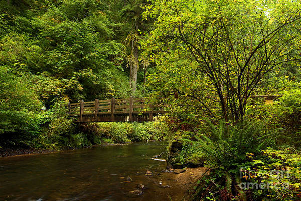 Photograph - Rain Forest Bridge by Adam Jewell