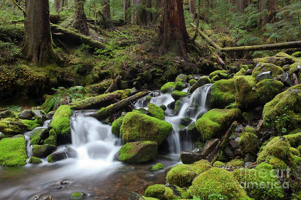 Wall Art - Photograph - Rain Forest Waterfall by Keith Kapple