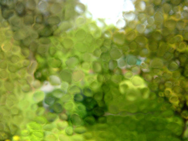 Photograph - Rain On Glass by Roberto Alamino
