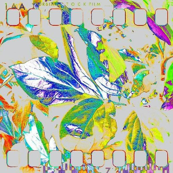 Abstract Flowers Wall Art - Photograph - Rainbow Leaves Abstract #android by Marianne Dow