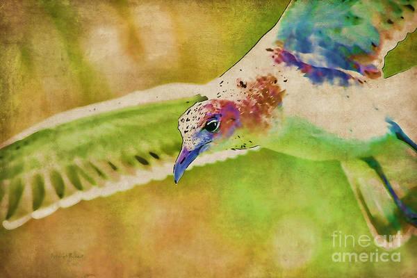 Photograph - Rainbow Seagull by Deborah Benoit