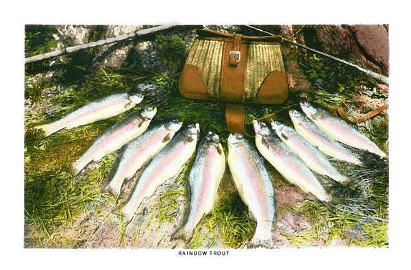Fishing Pole Digital Art - Rainbow Trout by Kevin Felts