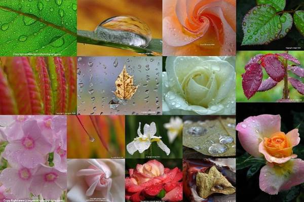 Photograph - Raindrop Photography Artwork by Juergen Roth