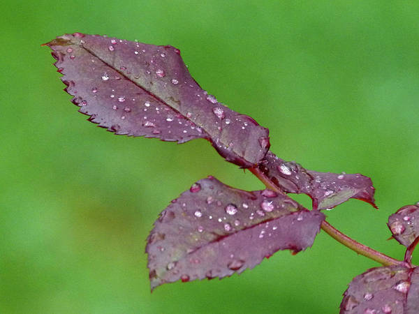Photograph - Rainy Day by Juergen Roth