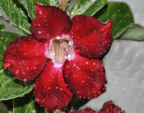 Desert Rose Photograph - Rainy Day Morning by Sandy Poore