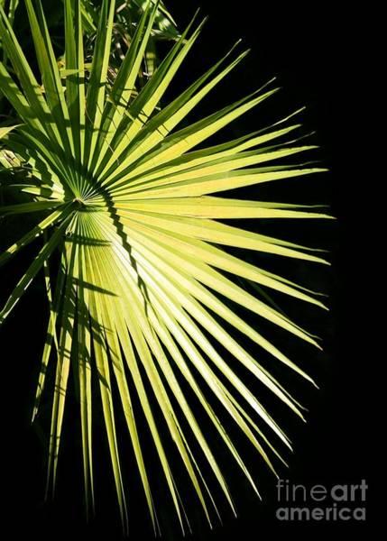 Photograph - Rays Of Light by Sabrina L Ryan